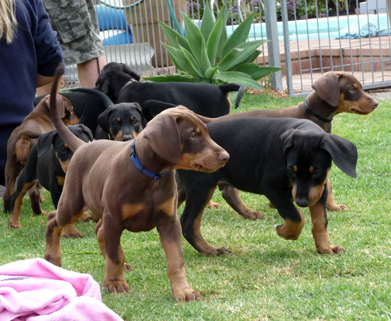 puppies_19oct14