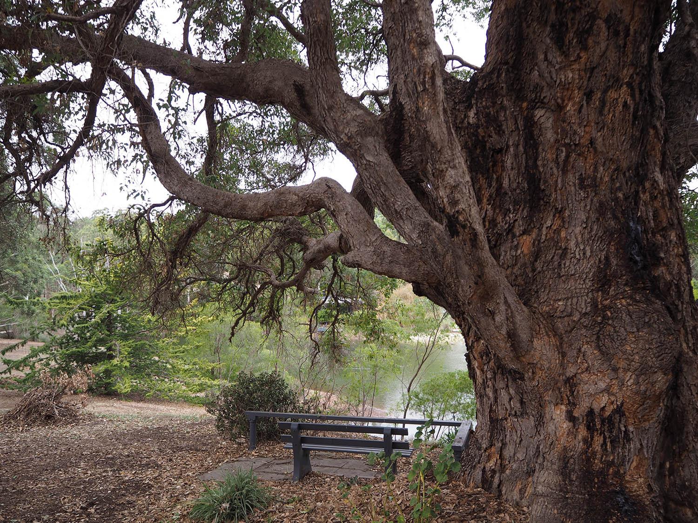 Bridgetown Faraway Tree