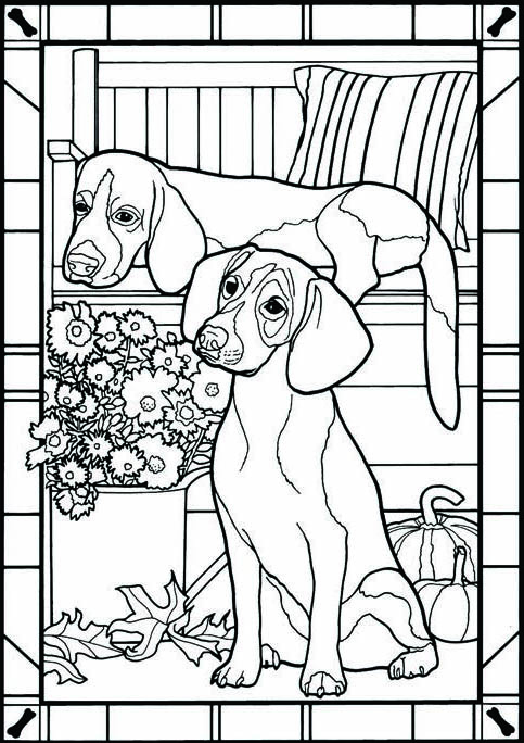 47802-5-beagles