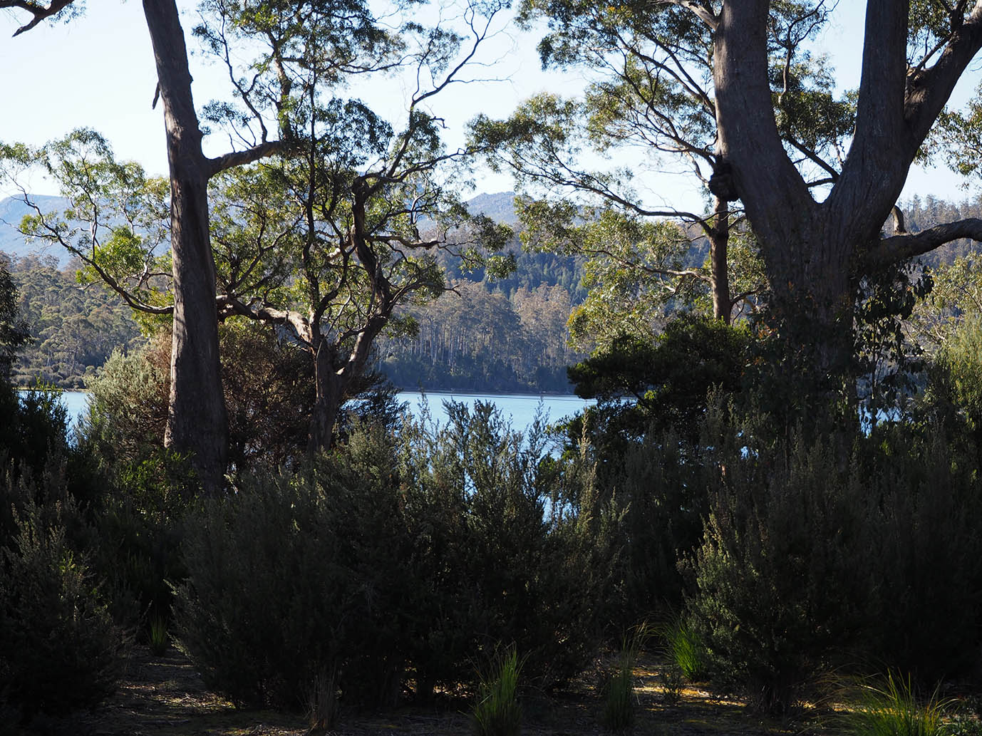 Lake St Clair / Cradle Mountain