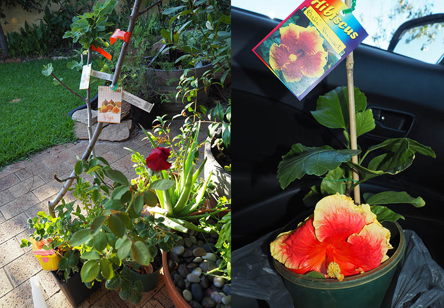 new plants_26feb16