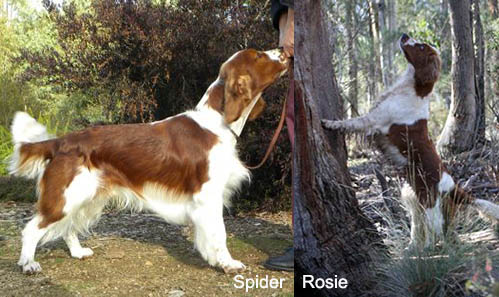spider and rosie