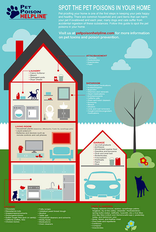 Pet Poisons Infographic.jpg