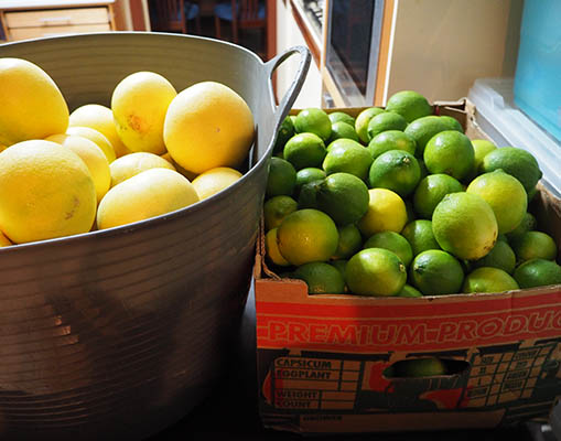 Some of our 2016 citrus harvest