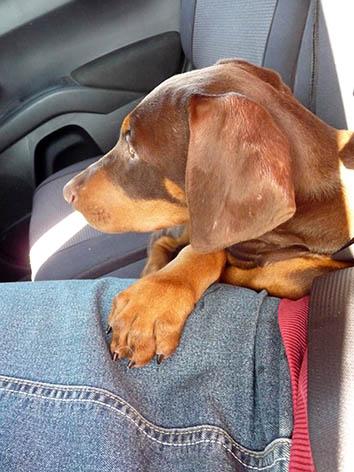 Molly en route home_2014