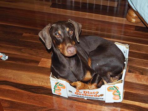 Molly in a box