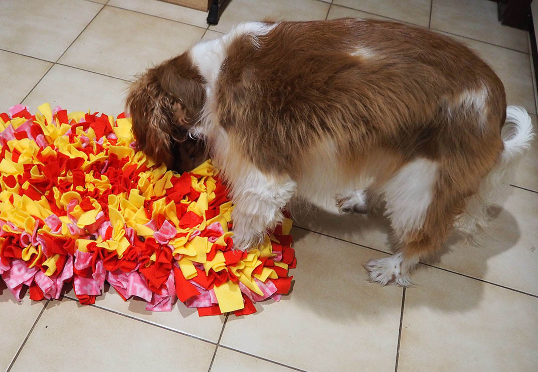 Snuffle mat - in use
